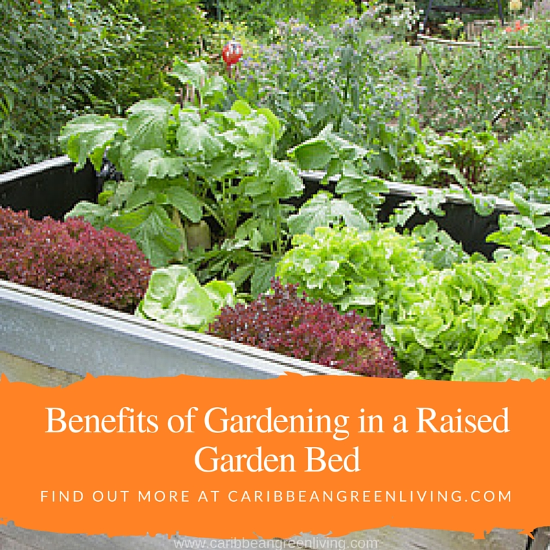 Benefits of Gardening in a Raised Garden Bed