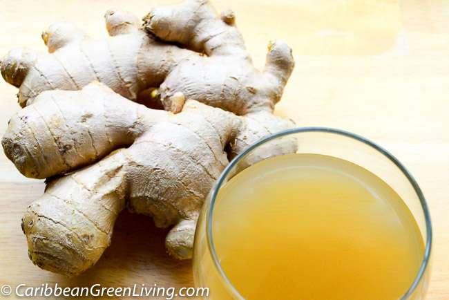 Ginger Nectar - caribbeangreenliving.com