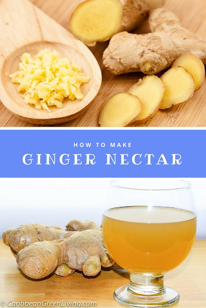 How to make Ginger Nectar - caribbeangreenliving.com