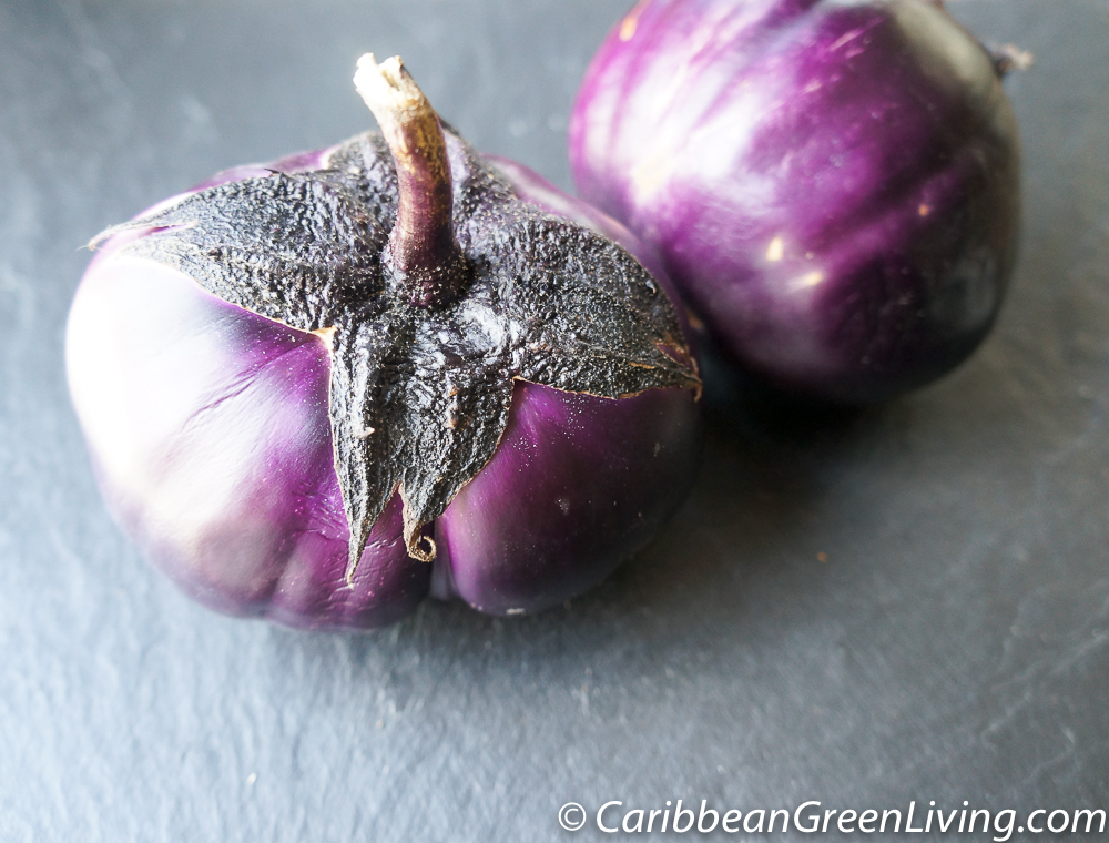 Barbarella Eggplant
