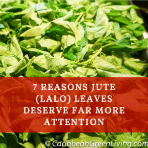 7 Reasons Jute (Lalo) Leaves Deserve Far More Attention