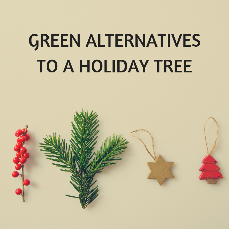 GREEN ALTERNATIVES TO A HOLIDAY TREE