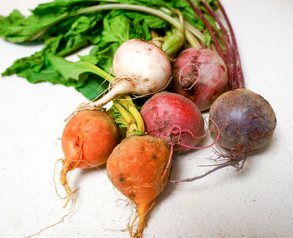 Beetroots varieties